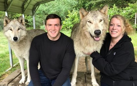Would You Like to Own a Wolf?