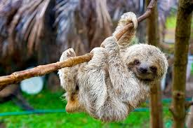 The Sloth Sanctuary of Costa Rica