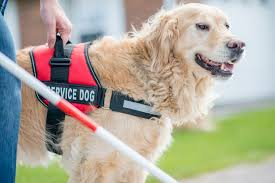 Benefits of Service Animals