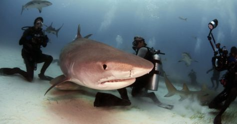 Saving the Sharks